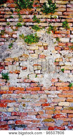 Decay Brick Wall And Plant In Burano
