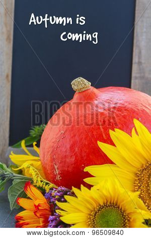 fall sunflowers with pumpkin