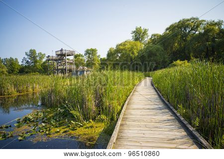 Wooden board walk and lookout on Pelee point conservation area, Ontario, Canada