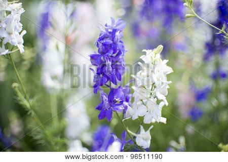 Detail of purple and white flowers with shallow DOF