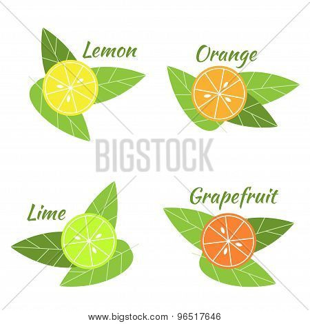Citrus fruits orange, lime, grapefruit and lemon