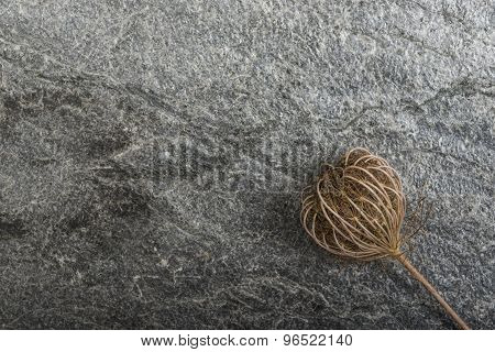 Dry plants on stone background