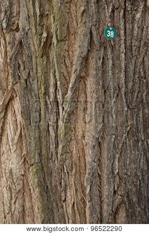 Tree Number 38