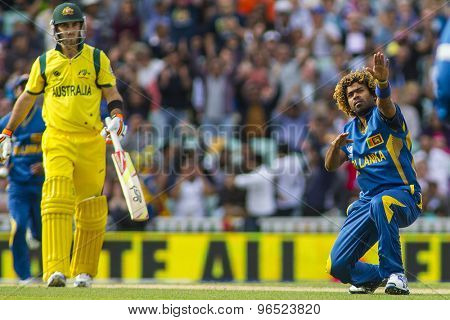 LONDON, ENGLAND - June 17 2013: Sri Lanka's Lasith Malinga celebrates taking the wicket of George Bailey during the ICC Champions Trophy international cricket match between Sri Lanka and Australia.