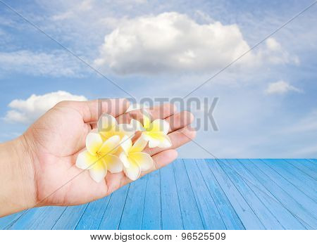 Tropical Plumeria Flower In Hand Holding With Sky Background