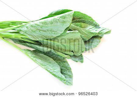 Chinese Kale Vegetable On White Background