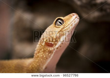 Cute Lizard Poses For The Camera
