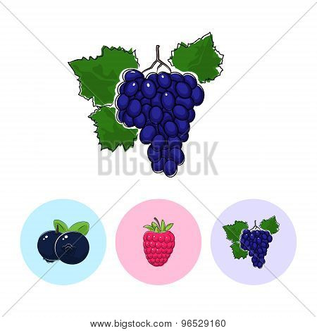 Fruit Icons, Grapes ,raspberries ,blueberries