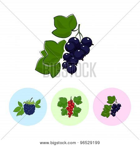 Fruit Icons, Blackcurrant ,redcurrant , Blackberry