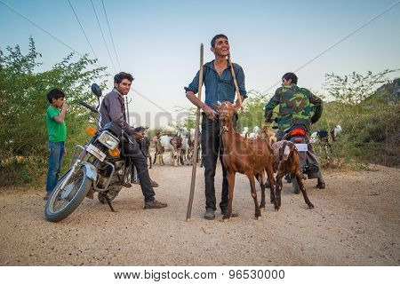 GODWAR REGION, INDIA - 13 FEBRUARY 2015: Local shepherds stand on gravel road with goat herd and motorbikes.