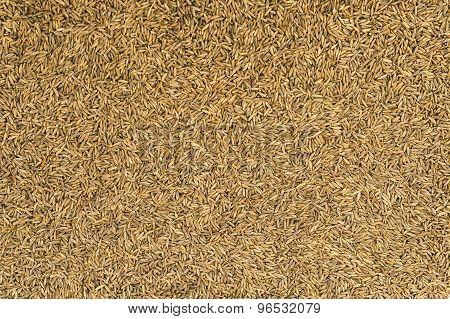 Dried Cumin Seeds (jeera)