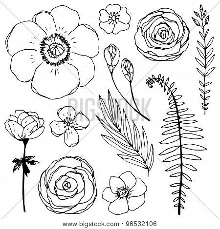 Set of unique hand drawn vector flowers and plants.