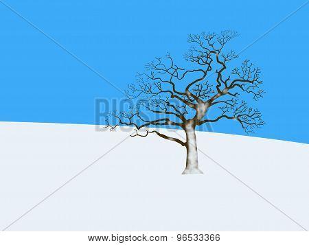 Bare Tree In Winter Landscape