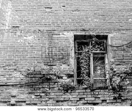 Ivy Clad Derelict Window Frame