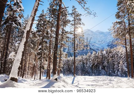 Winter Forest And Mountains At Sunny Day.
