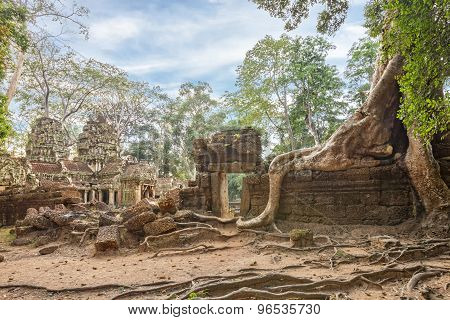 Ta Prohm Temple ancient tree roots, Angkor
