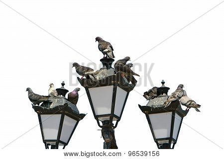Pigeons Sit On The Lights