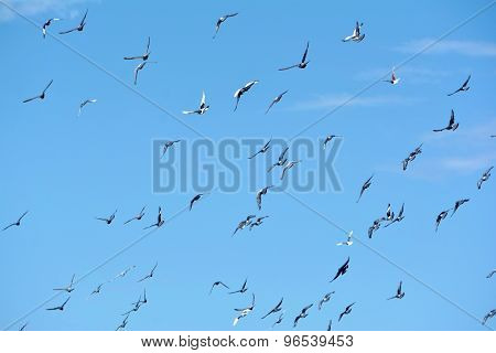 Pigeons Flying In The Sky