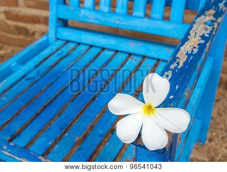Frangipani Flower On A Chair