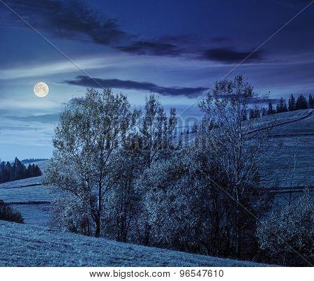 Few Trees On Hillside Glade At Night