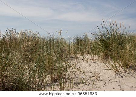 Baltic sand dune