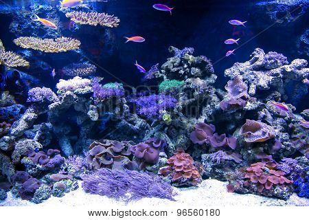 Tropical underwater life in a aquarium