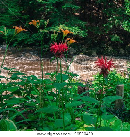 flowering plants grow by rushing stream