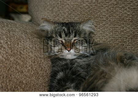 Cat Relaxing in Chair