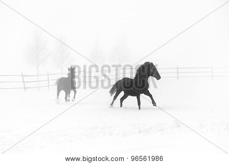 Horses galloping on a foggy day in winter
