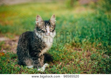 Small Cat Kitten Sitting On Green Spring Grass.