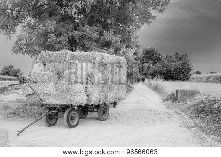 Landscape With Hay Wagon