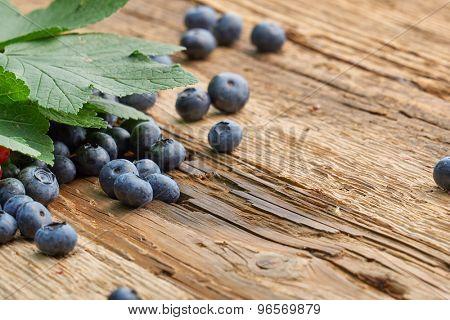 Fresh blueberries on wood table