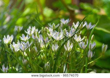 Delicate White Flower Garden On Sunny Day