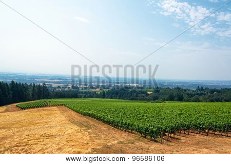 Vineyard And Willamette Valley