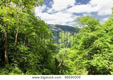 View at the mountains through trees from Chimney rock state park, North carolina