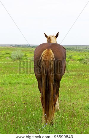 Back of brown horse over meadow background