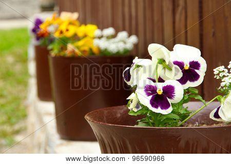 Flowerpots along wooden fence