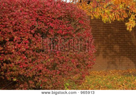 Garden Wall In Autumn