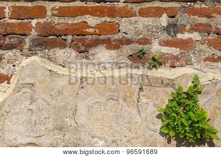 Old brick and concrete wall with weeds