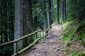 picture of wooden fence  - footpath fenced by a wooden fence in a pine forest - JPG