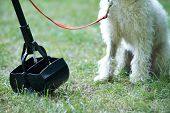 stock photo of pooper  - Owner Clearing Dog Mess With Pooper Scooper - JPG