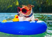 picture of toy dogs  - jack russell dog sitting on an inflatable mattress in water by the sea river or lake in summer holiday vacation rubber plastic toy included - JPG