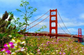 picture of bridge  - Flowers blussoome at the Golden Gate Bridge in San Francisco CA.Frommers travel guide considers Golden Gate Bridge possibly the most beautiful certainly the most photographed bridge in the world.
