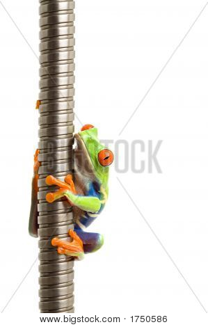Frog On Metal Spiral Isolated