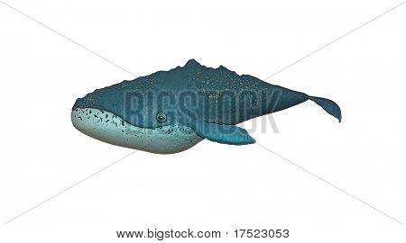 a nice whale illustration isolated on white