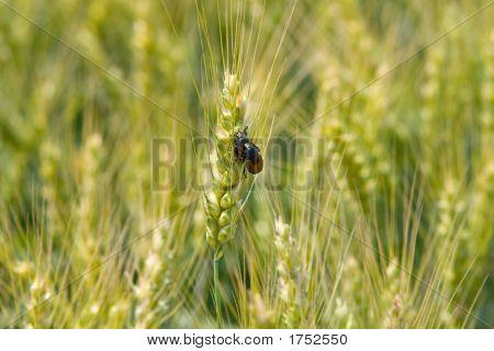 Coupling Bugs