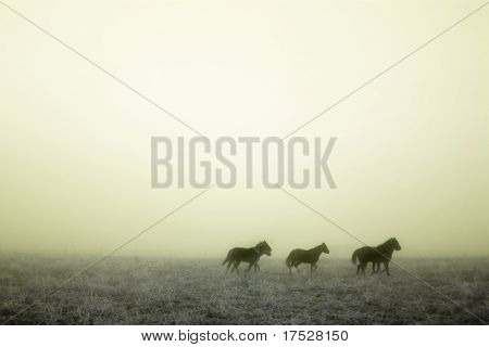 Horses galloping in the mist. contains noise at full size