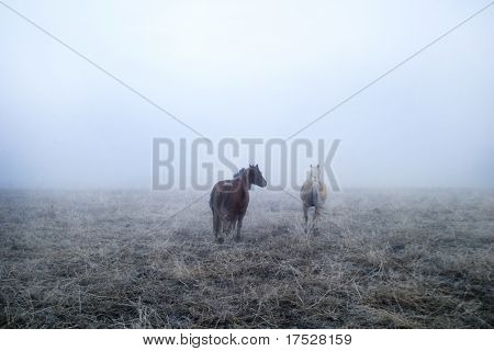 Horses galloping in the mist contains noise at full size