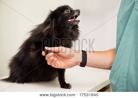 Close-up of veterinarian examining dog's paw