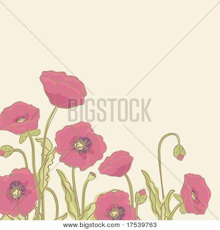 poppy border